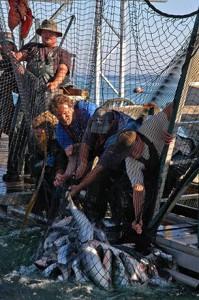 men_pulling_salmon